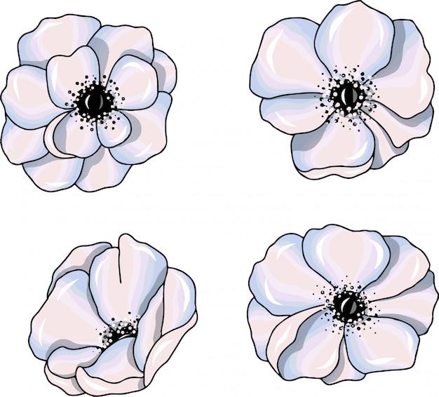 Weiße anemone blüht abbildungen