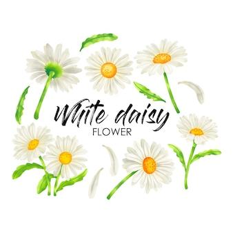 Weiße gänseblümchenblume in aquarellierten inspirierten vektoren