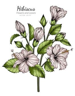 Weiße hibiskusblumen- und blattzeichnungsillustration mit strichzeichnungen auf weiß.