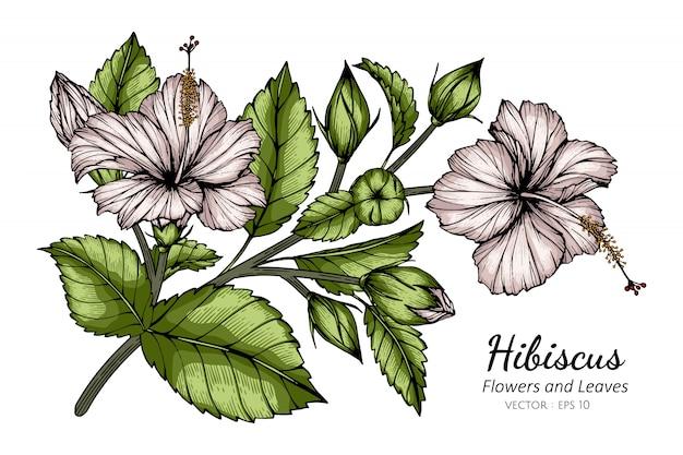 Weiße hibiskusblumen- und blattzeichnungsillustration mit strichzeichnungen auf weißem hintergrund.