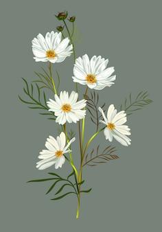 Weiße illustration der kosmosblume