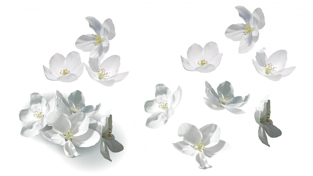 Weiße jasminblumen fliegen, fallen und in haufen