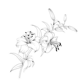 Weiße lilienblume.