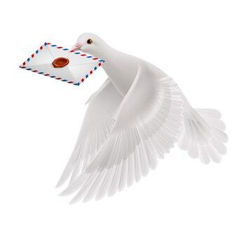 Weiße taube illustration