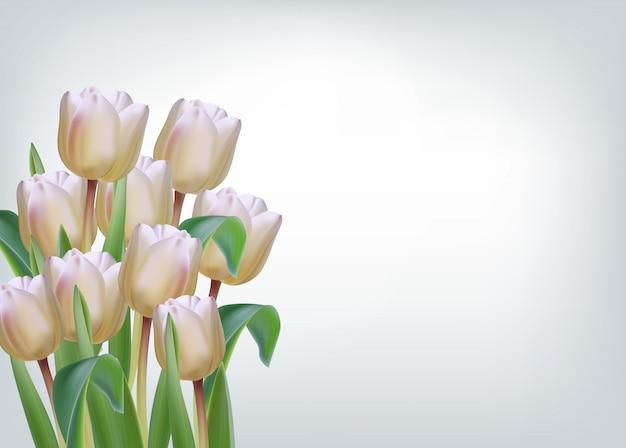 Weiße tulpenblumen