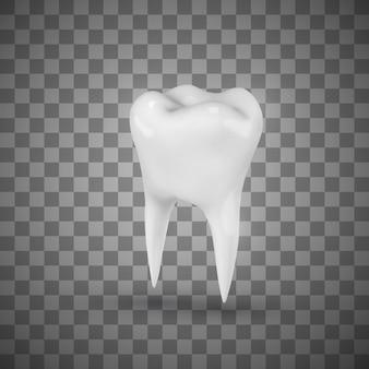 Weißer realistischer molar.