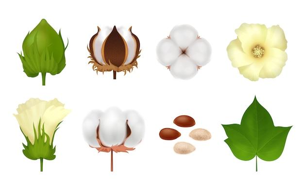 Weißes realistisches und 3d baumwollset mit stufen der wachstumsblume auf weiß