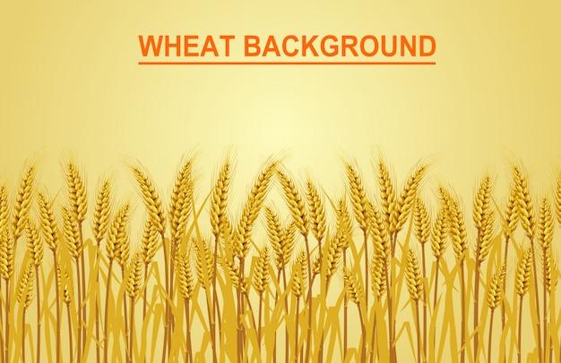 Weizen auf dem gelben hintergrund. vektor