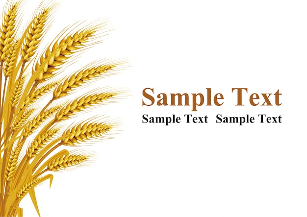 Weizen auf dem hintergrund in der linken ecke bietet platz für die texteingabe. vektorabbildungen