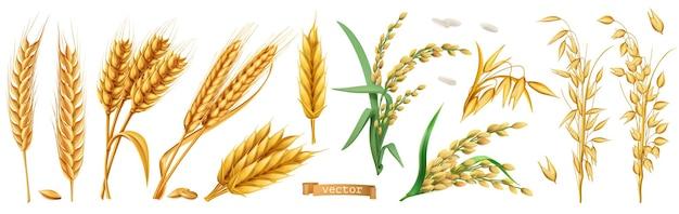 Weizen, gerste, hafer, reis 3d satz
