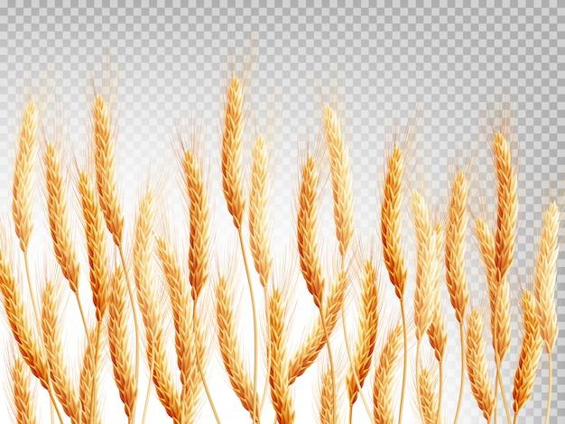Weizen isoliert auf einem transparenten hintergrund.
