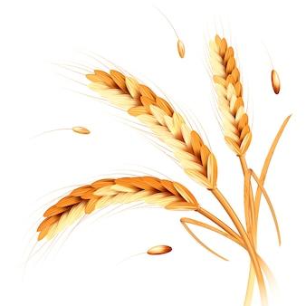 Weizen spitzt realismus
