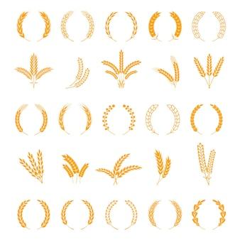 Weizen- und roggenohren. gerstenkorn ernten, reisstiel wachsen. feldgetreideikonen gesetzt. kranzspitzen und -stielvektor-bordürenelemente für geschäftszeichen