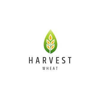 Weizenkorn landwirtschaft logo icon design vorlage flacher vektor