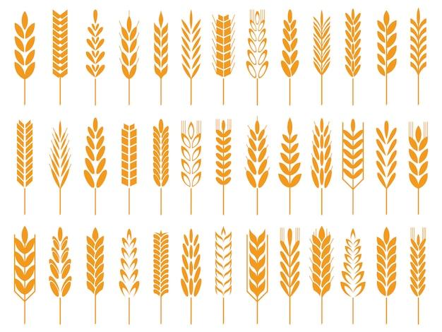 Weizenkorn-symbole. weizenbrotlogo, bauernhofkörner und roggenstielsymbol lokalisierten ikone