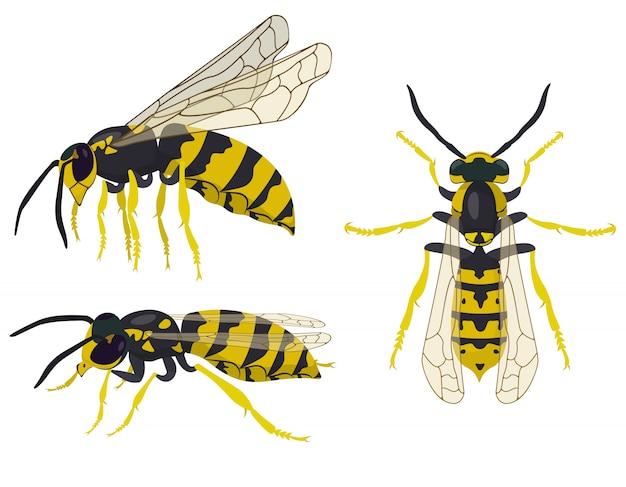 Wespe in verschiedenen posen. insekt im cartoon-stil.