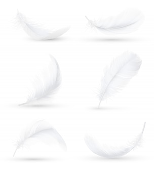 White feathers realistic set