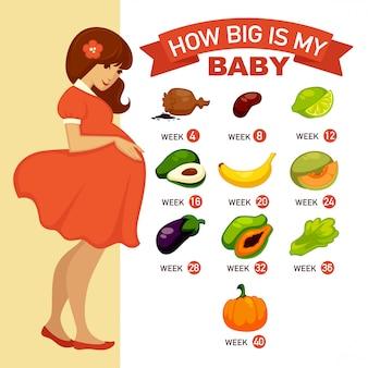 Wie groß ist mein baby? infographic konzeptillustration der schwangerschaft.