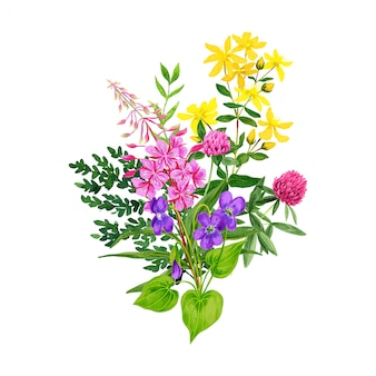 Wildblumenstrauß, weidenröschenklee