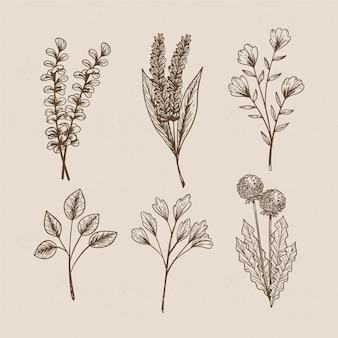 Wilde blumen im vintage-stil für botanische studien