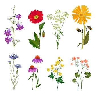 Wilde blumen. pflanzen botanische sammlung blumenset wiesenanis.