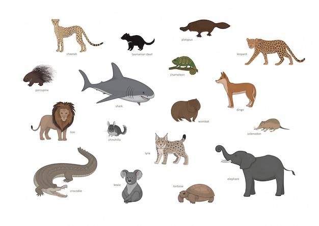 Wilde lebenssetillustration. gepard, tasmanischer teufel, schnabeltier, leopard, stachelschwein, hai, chamäleon, dingo, löwe, chinchilla, wombat, solenodon, luchs, krokodil, koala, schildkröte
