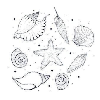 Wilde pflanzen, kräuter und blumen, monochrome botanische illustration im weinlesestil