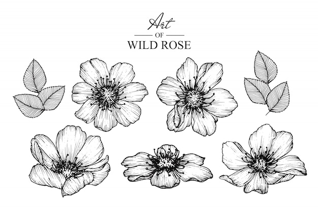 Wilde rose blatt- und blumenzeichnungen