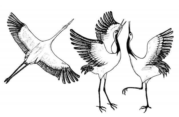 Wilde vögel im flug. tiere in der natur oder am himmel. kraniche oder grus und storch oder shadoof und ciconia mit flügeln.