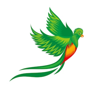 Wilder guatemala-vogel