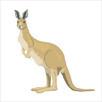 Wildes australisches känguru