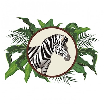 Wildes tier des zebras
