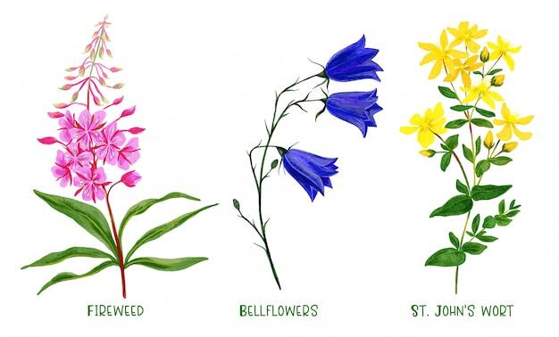 Wildfeldpflanzen und blumen gesetzt, handgezeichnetes aquarell
