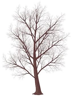 Winterbaum lokalisiert auf weiß