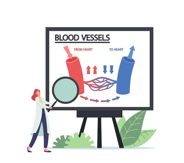 Winziger arzt-charakter mit riesiger lupe in den händen, der infografiken der blutzirkulation in venen, arteriengefäßen des herzens präsentiert. medizin anatomie, gesundheitswesen. cartoon-menschen-vektor-illustration