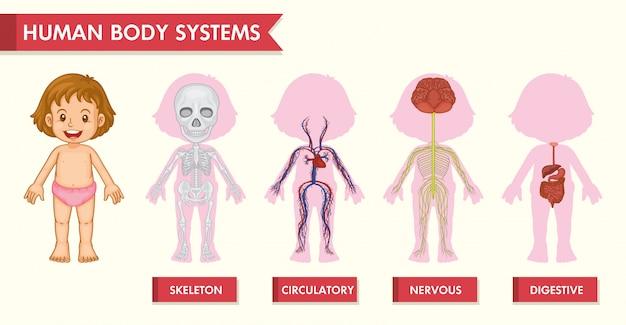 Wissenschaftliches medizinisches infographic von mädchenmenschensystemen