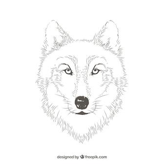 Wolf porträt linien