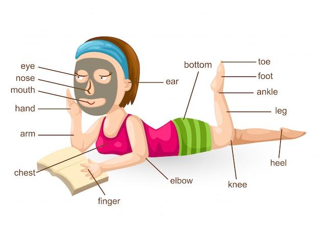 Wortschatzteil des körpervektors