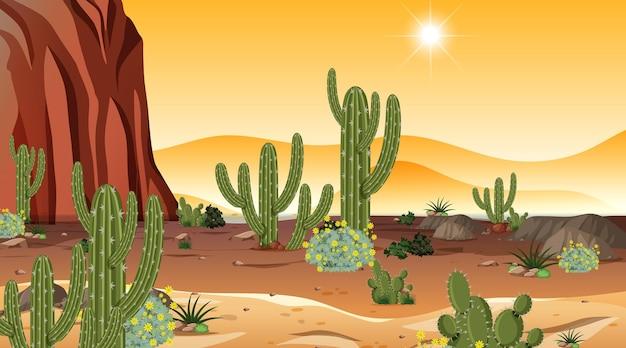 Wüstenwaldlandschaft bei sonnenuntergang mit vielen kakteen