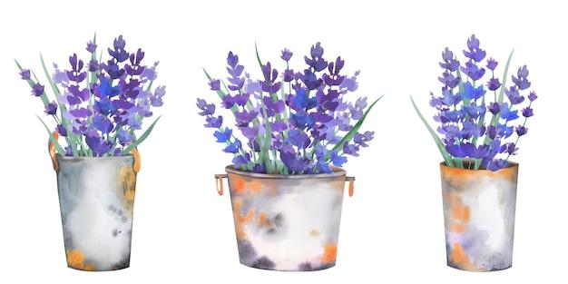 Wunderschöne blumensträuße aus lavendel in rostigen metalleimern und gießkannen.