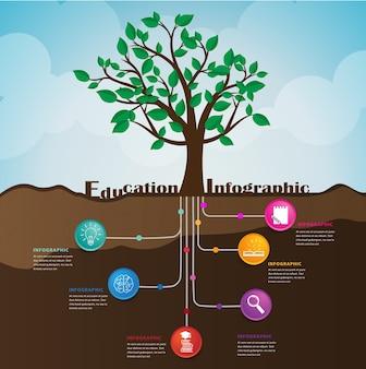 Wurzel der bildung. kann für infografik und präsentation verwendet werden.