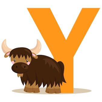 Y oder yak