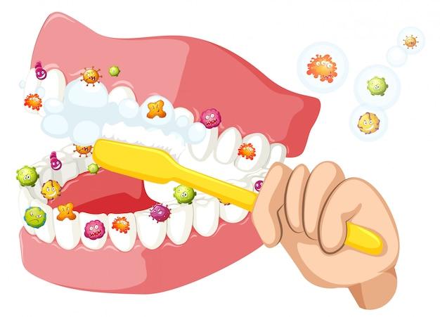 Zähne putzen und bakterien entfernen