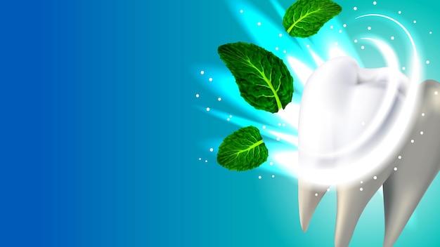 Zahn und natürliches aroma minze leaf copyspace vector