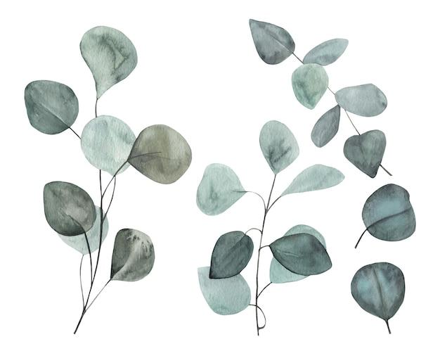 Zarte minze handgezeichnete aquarell eukalyptus mit zweigen, blätter gesetzt.