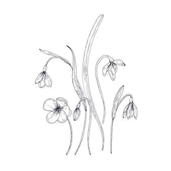 Zarte schneeglöckchenblumen lokalisiert auf weißem hintergrund