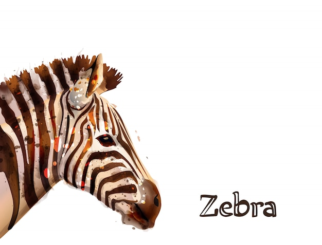 Zebra auf weißem aquarell