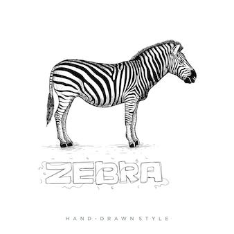 Zebra hand gezeichneten stil, tierillustration sieht realistisch, schwarz und weiß abstrakt