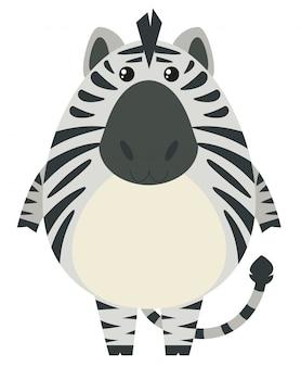 Zebra mit rundem körper