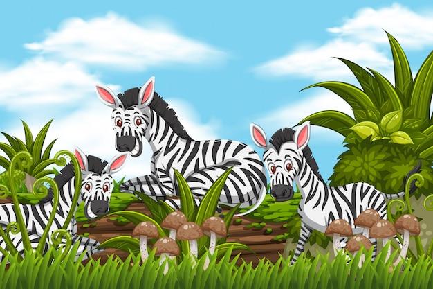 Zebras in der dschungelszene